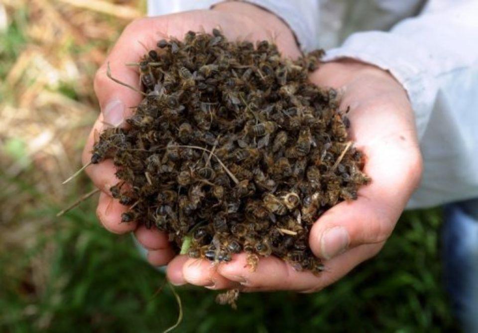 La canicule : conséquences sur les abeilles